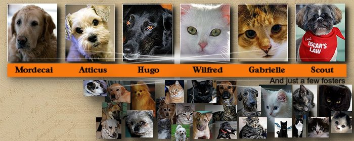 Some foster cats and dogs